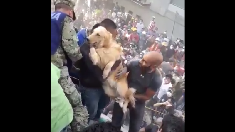 Moment viral după cutremurul din Mexic. Reacția oamenilor când un Golden Retriever este salvat. VIDEO