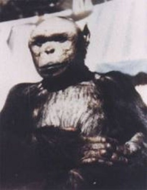 Omul-cimpanzeu