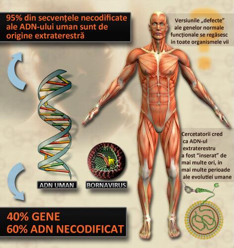 ADN extraterestru