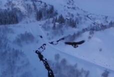 Natura vs tehnologie. Ce se intampla cand o drona este atacata de un vultur. Video