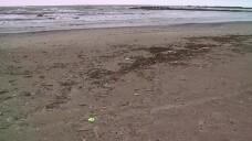 60.000 de tone de gunoaie, stranse din Marea Neagra. Deseurile au provocat moartea a numeroase specii de pesti