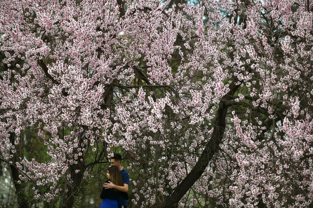 Parcul Regele Mihai I al României, primăvara