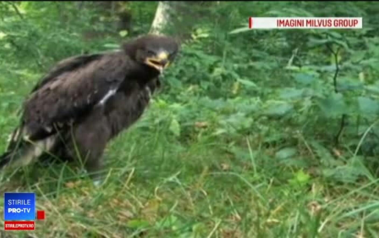 pierderea în greutate vultur aterizare