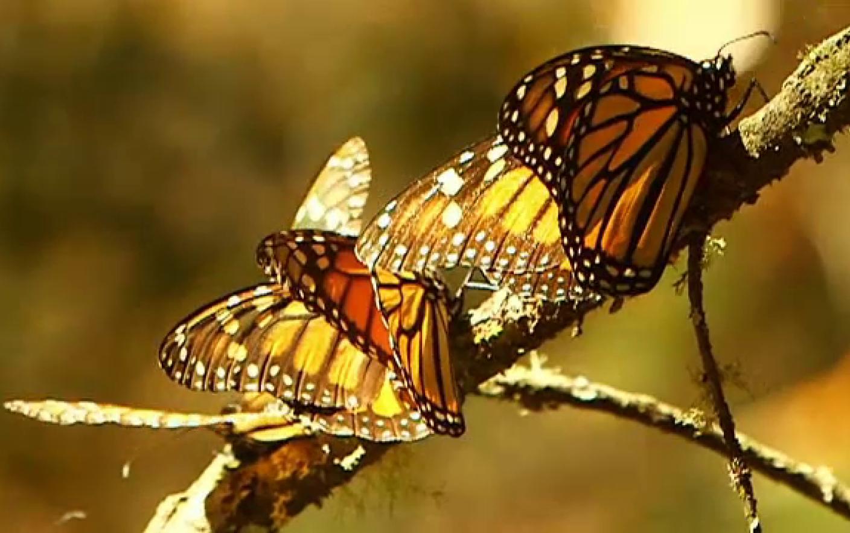 strategia de opțiuni fluture câștigă bani în fiecare oră