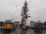 Brad de Crăciun din Chișinău