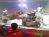lupta la circ in China