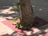 copacii-din-bucurei