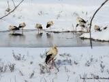 cum-putem-salva-berzele-de-frig-semnul-care-arata-ca-aceste-pasari-au-nevoie-de-ajutor