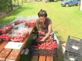 terapie-prin-horticultura-de-ce-este-bine-sa-muncim-c