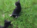 un-pui-de-pisica-salvat-cu-dificultate-dintro-canalizare-cum-au-aci