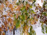 vremea-20-octombrie-temperaturile-scad-p