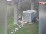 urs-filmat-cum-distruge-o-ui