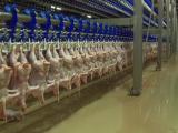 Zeci de tone de carne de pasăre din impor, depistate cu salmonella de reprezentanții Autorității Sanitar Veterinare