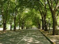 Copacii absorb tot mai putin CO2, aerul este tot mai poluat