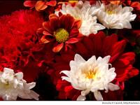 Floraresele romance, femei de afaceri. Exporta in Dubai, India sau Rusia