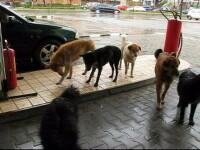 Bucuresti: capitala europeana a cainilor vagabonzi! VIDEO