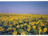 Agricultura in 2010: productie buna, preturi mari! De ce?