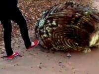 Creatura neidentificata pe o plaja din Anglia. Viral pe net