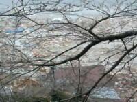 IMAGINI NEMAIVAZUTE. Japonezii fug din calea valurilor seismice uriase