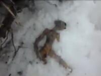 Trupul unui extraterestru, gasit in Siberia langa un OZN. VIDEO