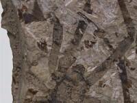 Paianjenul-dinozaur. Fosila din Jurassic, perfect conservata 165 mil. ani