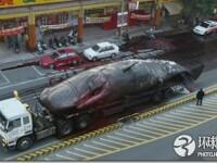 Noi fotografii cu balena de 50 de tone care a explodat in mijlocul orasului. Instantanee incredibile