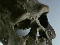 Se rescriu cartile de istorie. Focul, descoperit cu 300.000 de ani mai devreme