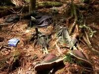 Cel mai mare mister al Japoniei. Padurea in care sunt descoperite 100 de cadavre in fiecare an
