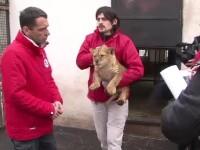 Tigrii si leii salvati din gradina zoologica Onesti au ajuns in Africa. Drumul a costat 25.000 euro