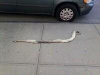 Ce a descoperit un barbat pe un trotuar.