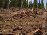 Padurar din Alba, cercetat pentru taieri ilegale de arbori in Apuseni