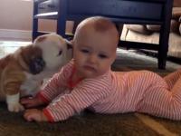 Dragostea dintre un pui de bulldog si un bebelus. Imaginile au facut deliciul publicului