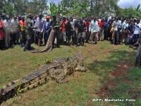 Un crocodil de o tona, care a mancat cel putin patru oameni, a fost capturat in Uganda