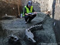 Fragmente din scheletul unui ANIMAL de talie mare au fost descoperite la Timisoara: \