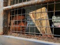 Violul care a cutremurat o tara si a schimbat legile. Trei barbati din India au fost condamnati la moarte
