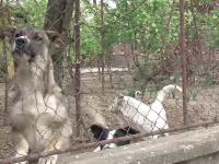 Baietel muscat de cainele familiei in Satu Mare. Copilul ar putea avea nevoie de operatie reparatorie