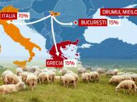 70% din mieii romanesti iau drumul Italiei. Cum ajuta exportul la scaderea pretului in piete