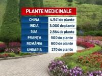 Profitul si sanatatea merg mana-n mana in cazul plantelor medicinale. Romania a inceput sa
