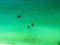 Doi inotatori din Florida trec milimetric pe langa moarte. Cine se afla in spatele lor, la cativa metri distanta. VIDEO