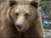 Scene de film horror intr-o rezervatie din Rusia. Ce s-a intamplat dupa ce turistii au calcat un urs cu masina. VIDEO