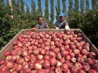 Lovitura primita de Moldova din partea Rusiei. Pierderi uriase dupa embargo-ul asupra fructelor si legumelor