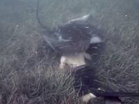 Imagini incredibile cu o pisica de mare care pare ca inghite un barbat. Ce s-a intamplat cu scafandrul. VIDEO
