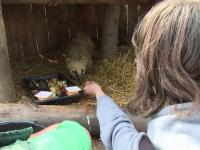Adoptia la distanta, metoda prin care oricine poate avea grija de un animal exotic. Ce indatoriri au