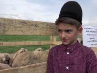 Sute de oi, admirate la Sarbatoarea Oieritului. Rasa romaneasca din Hateg care ajunge sa coste si peste 1000 de euro