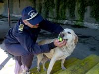 Fabana, cainele politist, specializat in depistarea drogurilor, pe care nimeni nu-l vrea. Catelusa a fost scoasa la licitatie