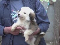 Targ de adoptii, de Ziua Internationala a Animalelor fara Stapan. Un barbat care isi pierduse cainele l-a regasit la targ