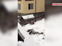 Un urs si-a facut aparitia langa gardul unei pensiuni din Azuga. Ce spun proprietarii vilei despre prezenta sa
