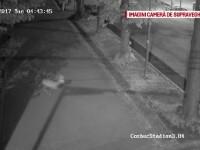 O caprioara s-a ratacit si a ajuns printre blocurile din Cluj-Napoca. Veterinarii n-au reusit sa il tranchilizeze