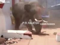 Un bărbat a fost ucis de un elefant scăpat de sub control, în timpul unui ritual, în India