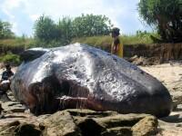 Descoperire şocantă în stomacul unui caşalot găsit mort pe plajă, în Spania